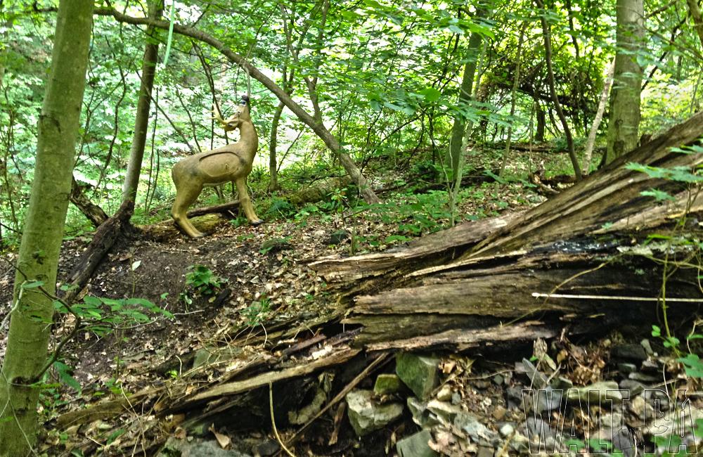 Stowe Archers - June 2014 - 25